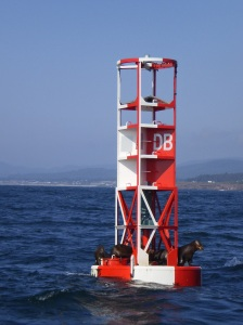 """Sun Bathers"" on the whistle buoy"